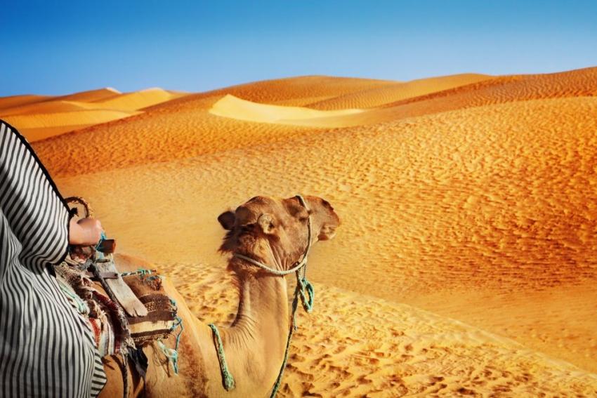 activites evjf marrakech balade en chameau