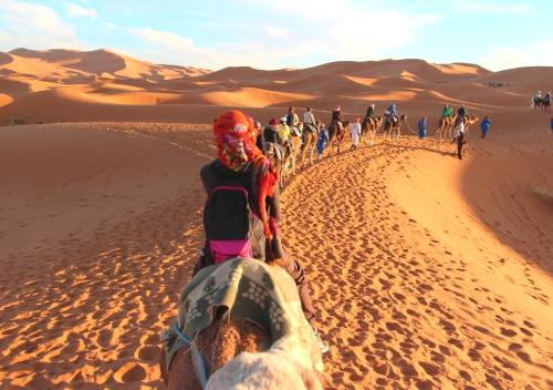 evjf marrakech balade en dromadaire chameau dans le desert
