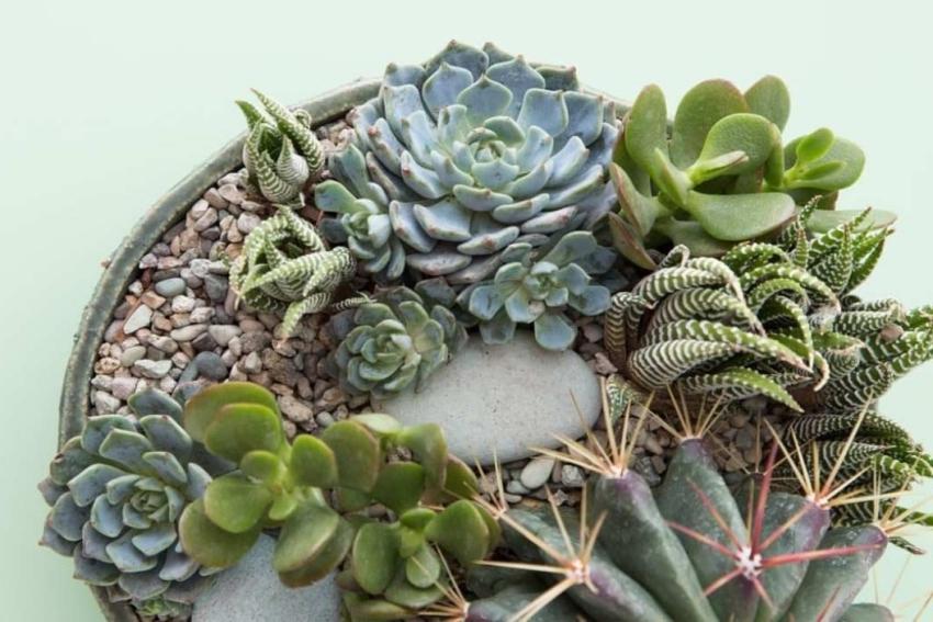 composition de cactus succulentes et vegetaux dans un pot