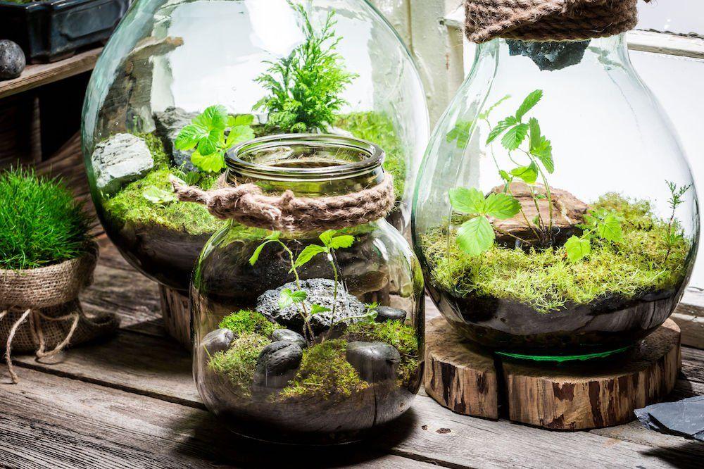 terrariums deauville