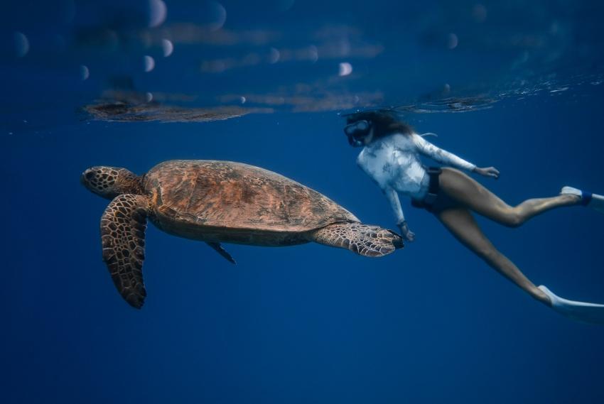 snorkeling tortue plongee