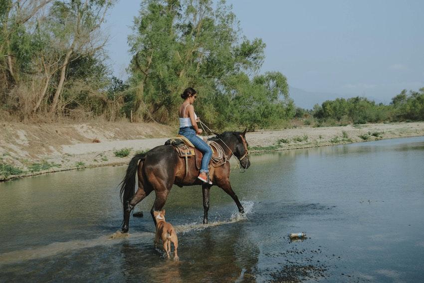 activite promenade a cheval