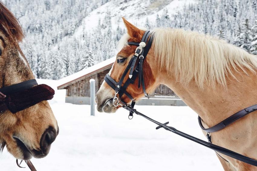 deux chevaux dans la montagne avec de la neige et un chalet enneige