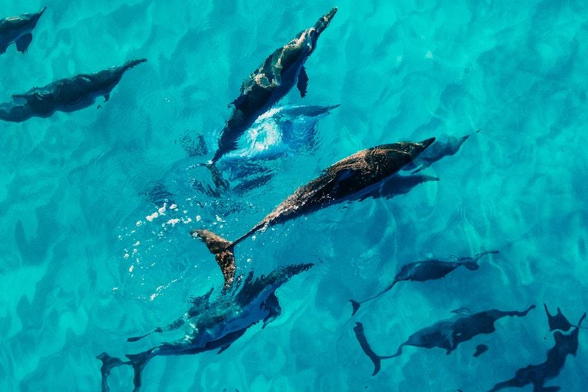 eau turquoise dans laquelle se baignent des dauphins