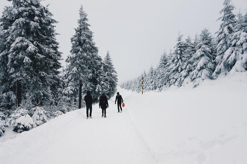 groupe damis dans la neige entoure de sapins