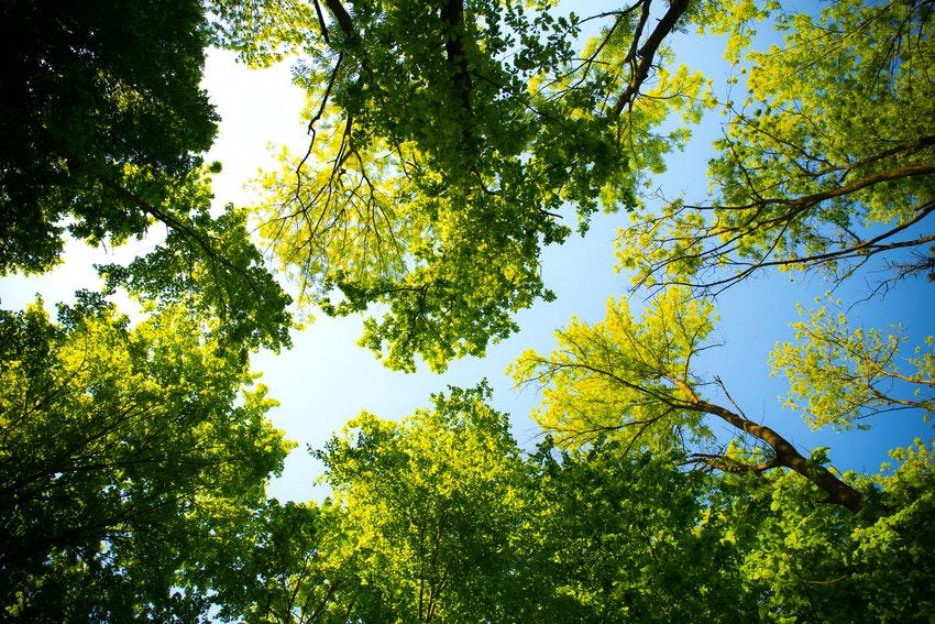arbres fleuris dans le ciel bleu