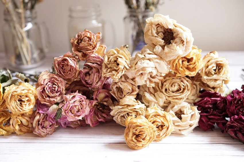 bouquet de roses sechees