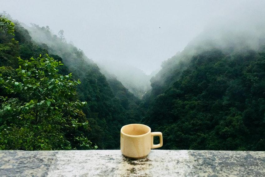 tasse de tea pose sur un mur face a la foret et le brouillard